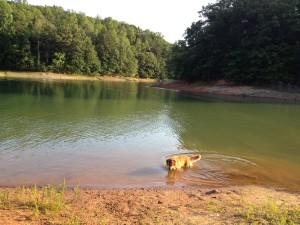 dog swim lake lanier