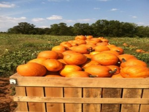 Jaemor Farms Pumpkin Patch