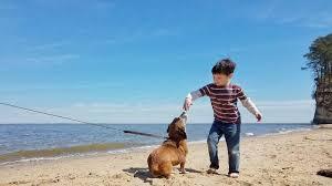 Lake Lanier CVB| Lake Lanier Dog Friendly Parks | Discover Lake Lanier
