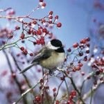 Did You Know You Can Help Birds Beat Their Winter Woes