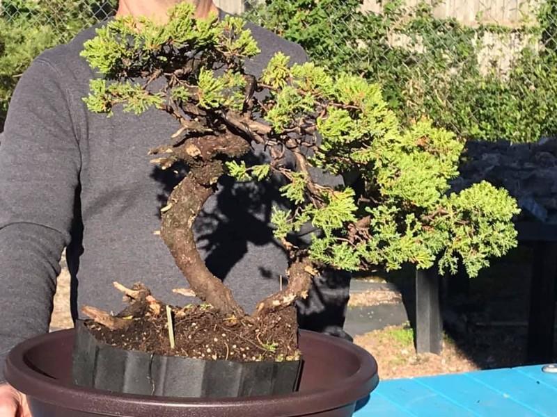 Plant City Bonsai